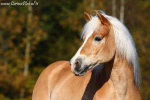 Willy II by MissToseland