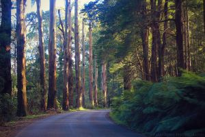 Down the Forest Road by FlabnBone