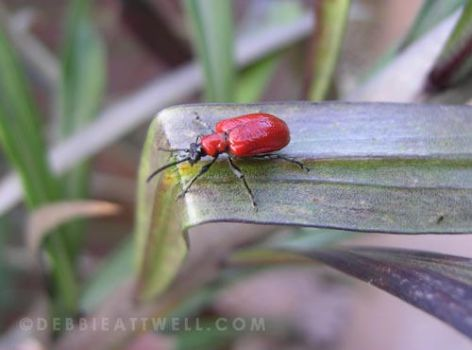 Mr Bug on the Edge by debbieattwell