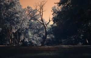 Infrared Attempt by xtrmquestion