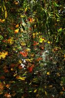 Willow Island Autumn by Earth-Hart