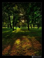 light in the woods by adypetrisor
