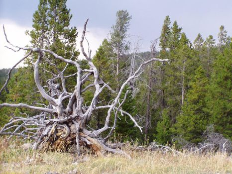 Gnarled by Magooalou