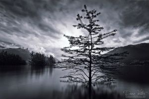 The tree in the water by LinsenSchuss