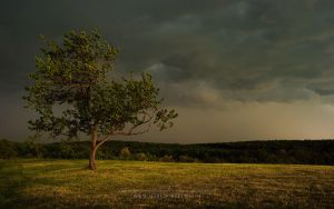 The Day of Anger by markborbely