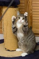 Paws up by hoschie