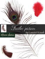 Feather pictures - pack 01 by LunaNYXstock