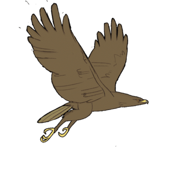Eagle Flying cycle (Animation) by ALF-L