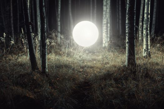 Night Forest by Eredel
