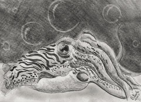 Cuttlefish by SulaimanDoodle