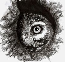 Owl in the Hole by A-JD