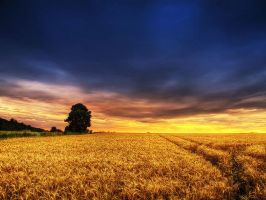 Summer wheatlands pt.XII. by realityDream
