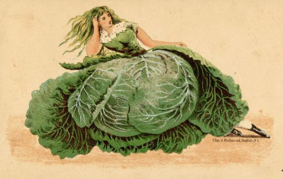 Miss Cabbage by Yesterdays-Paper