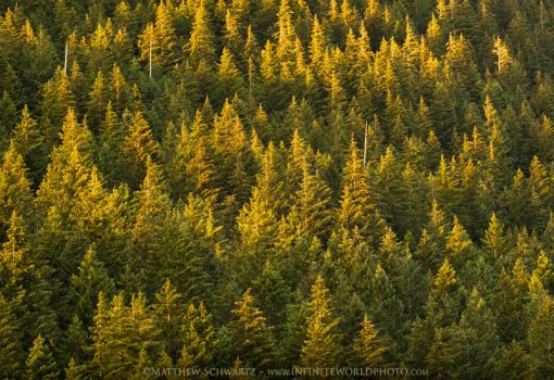 Mountain Trees Sunset by Nature-Photo-Master