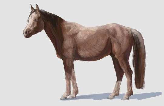 Horse Render Study by Dewheart85