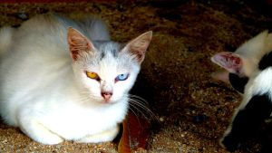 Cat with weird eyes by RayyanCR