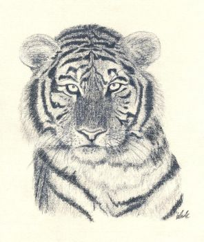 Siberian tiger by Katy-Fried-Chicken