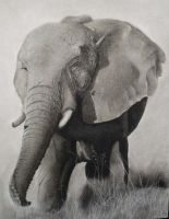 charcoal elephant by machariart