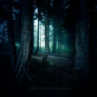 secret forest by incisler