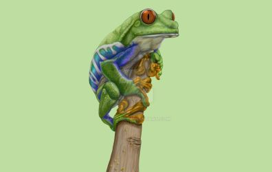 Tree Frog Color Pass by Ap3jak