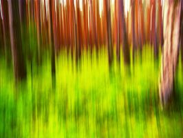 Forest e-motion by LaRoseDePetitPrince