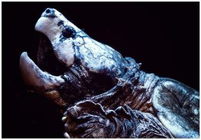 Snapping Turtle by ciseaux