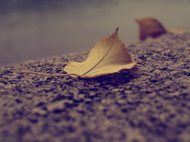 and leaves are falling. by Pitty-ViolentLOVE