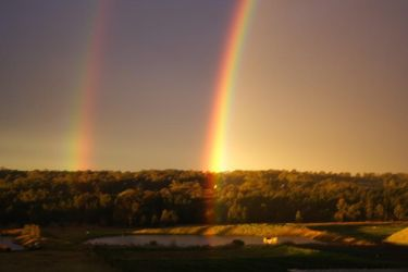 Double Bow by kram92