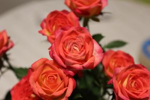 Roses 2 by MagicCollector