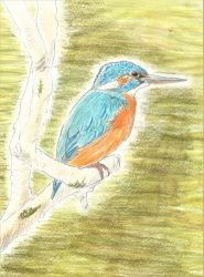 Kingfisher by ComtePatatas