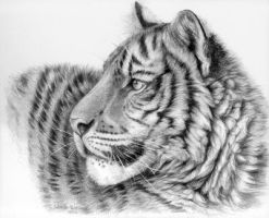 Young Tiger by sschukina