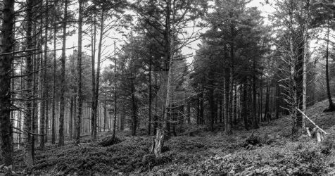Cape Lookout Woods - Pano in Black and White by JamesInDigital