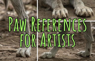 Paw References for Artists by Khalliysgraphy