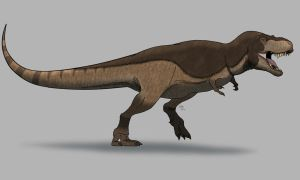 Yet another T. rex. by allotyrannosaurus