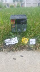 What is this, a protest for ants? by fairchildart