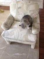 Gigi all alone on a living room chair by dth1971