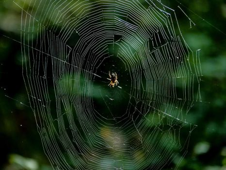 Spider web 1 by mrscats