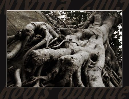 Roots oblique by Truffinthebox