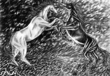White Horse/ Black Horse by Steff00