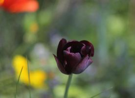 old lense- new flower by DieCooleSocke