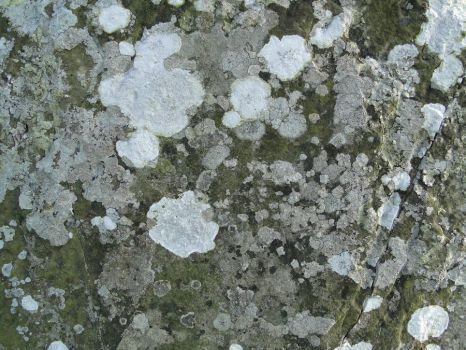Grave Stone Texture 1 by maeame21