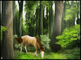 Forest by julka8000