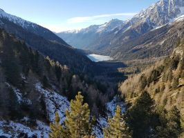 Forest by DARKRAG0N