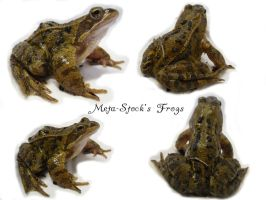 Frog Stock 1 by Meta-Stock