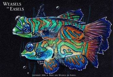 Mandarin Fish - Colored Pencils by WeaselsOnEasels