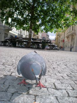 Prague Dove by Swebilius