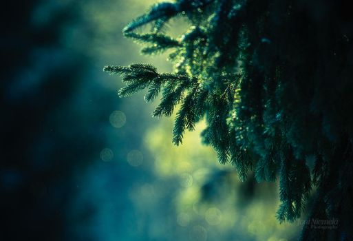 Cold Greens by JoniNiemela