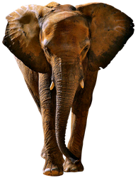 unrestricted hq elephant 2 by aio350