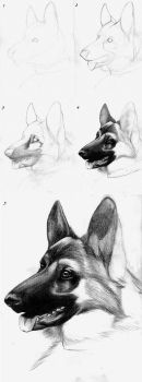 Canine Drawing Tutorial - GS by roseofaurora