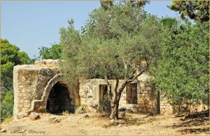 Ruins and olive trees by ShlomitMessica